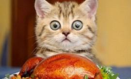 surprise thanksgiving cat