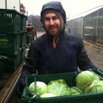 The author harvesting cabbages his first day on the job